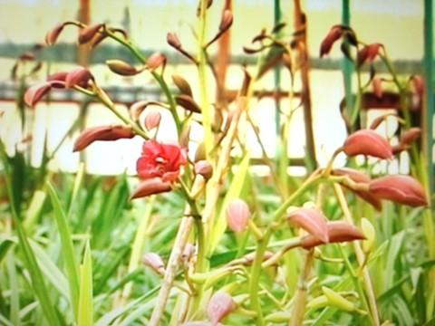 Trồng rau, hoa xứ lạnh măng đến