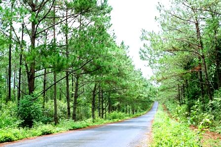 khu du lịch sinh thái quốc gia Măng Đen